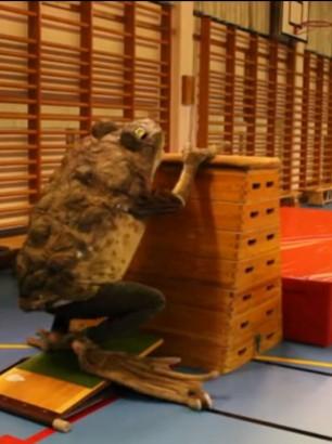 Redskapsgymnastik---Obstacle-(2012)